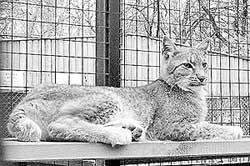 зоопарк Мишутка