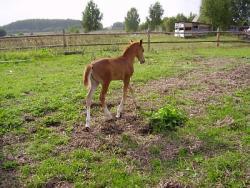 Серая лошадь