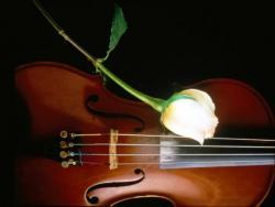 и скрипка.jpg